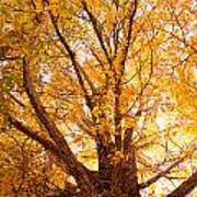 Golden Autumn View Art Print