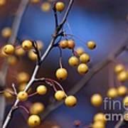 Golden Berries Art Print