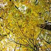 Golden Canopy Art Print by Rick Berk