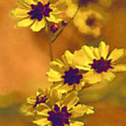 Golden Coreopsis Wildflowers  Art Print