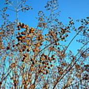 Golden Crepe Myrtle Seeds Art Print