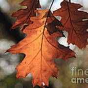 Golden Fall Leave's Close Up Art Print