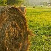 Golden Hay Field Art Print
