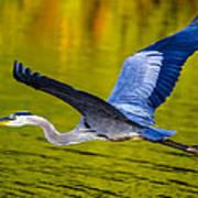 Golden Heron Art Print