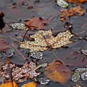 Golden Maple Dew Drops Art Print