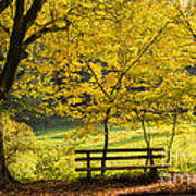 Golden October - Bench And Yellow Trees In Fall Art Print