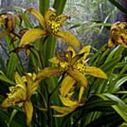 Golden Orchid Art Print