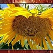 Golden Sunflower Art Print