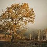 Golden Sunlit Tree With Mist, Yakima Art Print