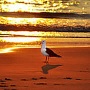 Golden Sunrise Seagull Art Print