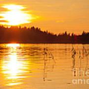 Golden Sunsset Art Print