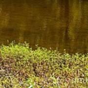 Golden Water's Edge Art Print