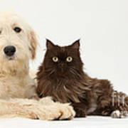 Goldendoodle And Chocolate Cat Art Print