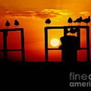 Goodnight Gulls Print by Karen Wiles