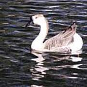 Goose And Lake Art Print