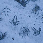 Goose Footprints In The Ice Art Print