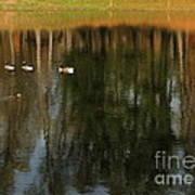 Goose Goose Duck Goose Print by Trish Hale