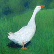 Goose On Green Art Print