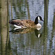 Goose Reflections Art Print