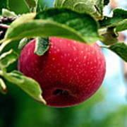 Gorgeous Red Apple Art Print