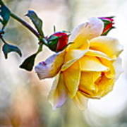 Gorgeous Roses Art Print