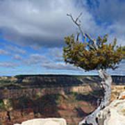 Grand Canyon Struggling Tree Art Print