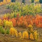Grand Teton Fall Color Art Print