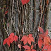 Grape Leaves On Column Art Print