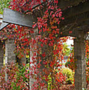 Grape Leaves On Columns Art Print