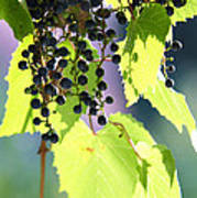 Grapes And Leaves Art Print