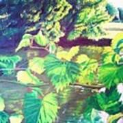 Grapevines Toledo Botanical Gardens Art Print
