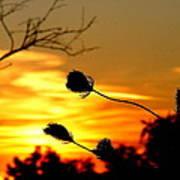 Grasping The Sunset Art Print