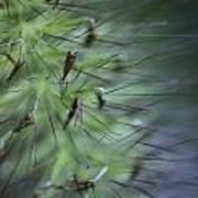 Grass Abstraction Art Print