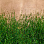 Grass And Stucco Art Print