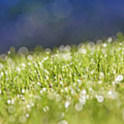 Grass, Close-up Art Print by Tony Cordoza