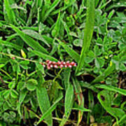 Grass Drops II Art Print