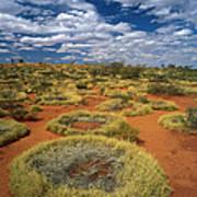 Grass Triodia Sp Covering Sand Dunes Art Print