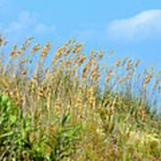 Grass Waving In The Breeze Art Print