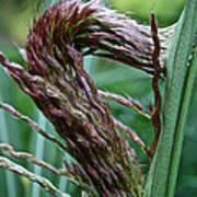 Grass Worm Art Print