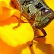 Grasshopper On Yellow Art Print by Maureen  McDonald