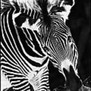 Gravy Zebra Art Print