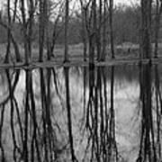Gray Day Reflections Art Print