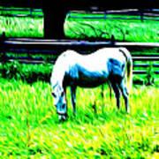 Grazing Horse Art Print by Bill Cannon