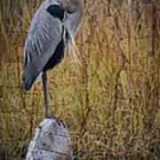 Great Blue Heron On Spool Art Print by Debra and Dave Vanderlaan