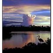 Great Blue Heron Sunset Art Print