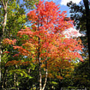 Great Fall Tree Art Print