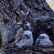 Great Horned Owl Twins Art Print