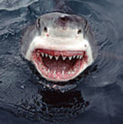 Great White Shark Smile Australia Art Print by Mike Parry