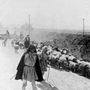 Greece Shepherds And Flocks - C 1909 Art Print by International  Images