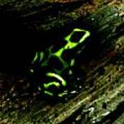 Green And Black Poison Dart Frog Art Print